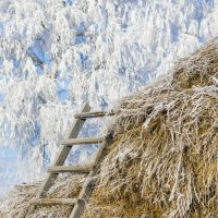 Лестница в зиму :: Татьяна Степанова