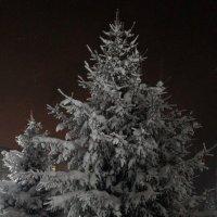 зимняя сказка :: Alexandr Staroverov