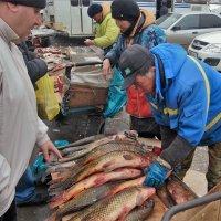 Рыбный день        серия 2\\5 :: Николай Сапегин