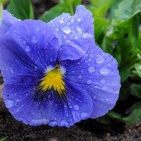 Весенний дождь 1 :: Galina
