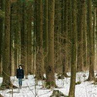 В лесу :: Никола Н