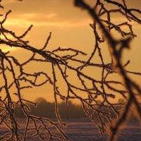 Парчовый шлейф сверкающего снега... :: Mariya laimite