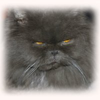 .....очи яхонтом горят.... :: Tatiana Markova