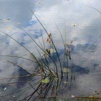 Небо в озере. :: Татьяна Алферова