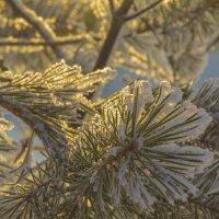 Ветка на морозе :: Николай Полыгалин