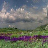 весенние моря травы, цветов, небес :: viton