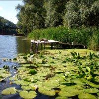 Пейзаж на реке :: Татьяна Пальчикова