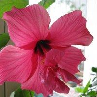 аленький цветочек :: Светлана Волконская
