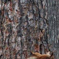 Охота на белку Фото №1 :: Владимир Бровко