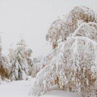 Зимняя осень :: Андрей Селиванов