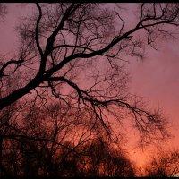 На закате.... :: Алексей Дмитриев