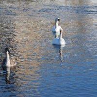 семья на реке :: linnud