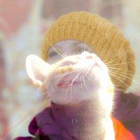 взгляд кошки :: Инна
