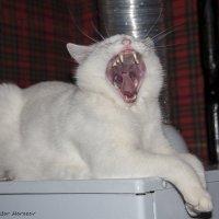 Страшный зверь:) :: Виктор М
