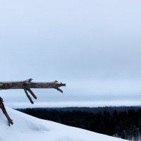 Зимние просторы. :: Андрей Скорняков