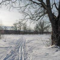 Лыжня :: Андрей Зайцев