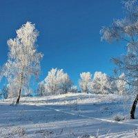 В снежном серебре. :: Наталья Юрова