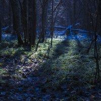 Красивый свет :: Евгений нитко