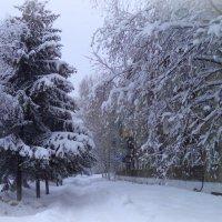 Утро 7-го февраля :: Лариса Карпушина