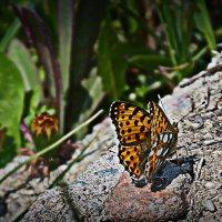 Ностальджи... Лето-бабочки-цветочки... :: Julia Martinkova