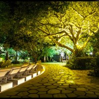 LIGHTING TREE :: LEVAN TAVADZE