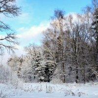 Зимний лес :: Ирина Пыхачева
