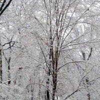 Зимняя графика. :: Елена