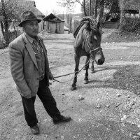 О лошадях и женщинах :: Александр Елизаров