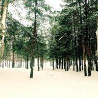 лес :: Ирина Cемко