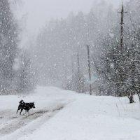 снег идёт :: Нина