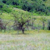 Одинокое дерево :: Виктор Шандыбин