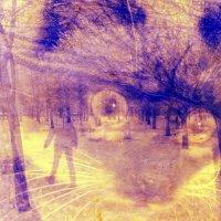 Ну где же весна... :: Ирина Сивовол