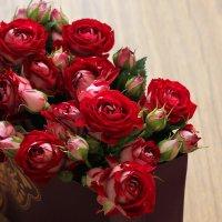розы :: Елена Лабанова