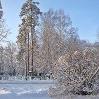 Морозный иней :: Лидия (naum.lidiya)