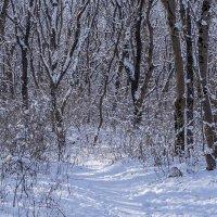 Снег украсил серый лес :: Игорь Сикорский