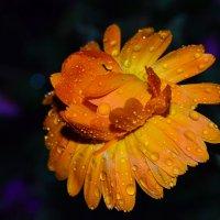 После дождя :: Татьяна Соловьева