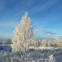 Растёт на полянке берёзка. :: nadyasilyuk Вознюк
