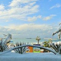 снег у моря... :: СветЛана D