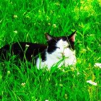 Мой кот Брюс :: Юрий Плющев