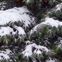 Зимний наряд. :: Ольга