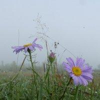 цветы августа :: Анна