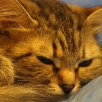 Спящая красавица :: Валерия Лидерман