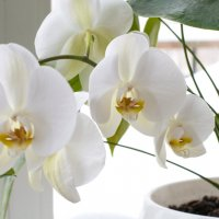 Цветы на подоконнике :: Елена Михеева