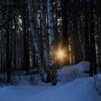 Сквозь лесную чащу. :: Андрей