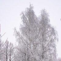 Снежные Королевы! :: Борис Кононов