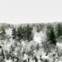 Уснувший на зиму лес :: Михаил Лобов (drakonmick)
