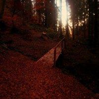 золота осіннь :: Яна Шкирта