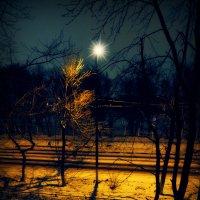Ночь фонарь. :: Виталий Виницкий