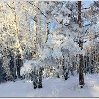 В снежных шубках :: Мария Кухта