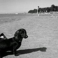 Бруно... :: Lilly